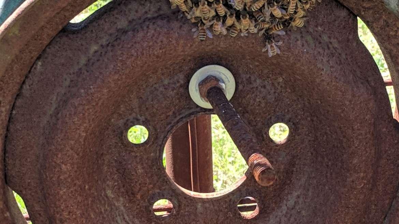 The Amazing Honey Bee