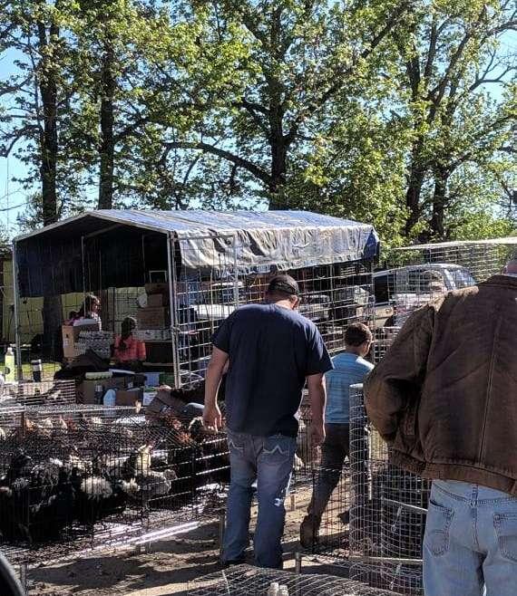 The Sale Barn