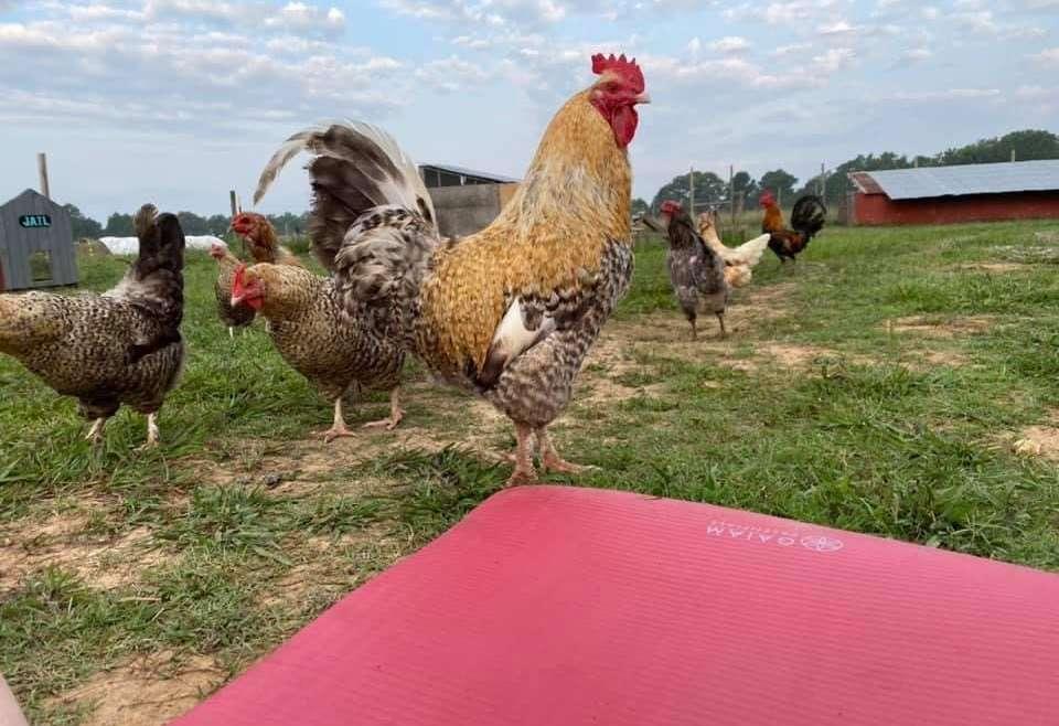 Yoga on the Farm!